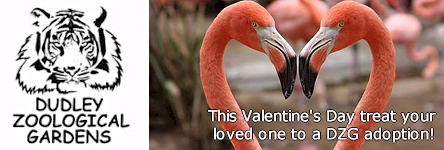 Dudley Zoo - This Valentine's Day Treat your Loved One to a DZG Adoption!